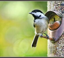 Chickadee at Feeder by Mikell Herrick