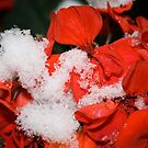 First snow 3 by sorinab