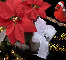 ✰。POINSETTIA AND CARDINAL CHRISTMAS PICTURE/CARD✰。 by ╰⊰✿ℒᵒᶹᵉ Bonita✿⊱╮ Lalonde✿⊱╮