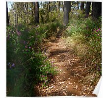 Path through flowers Poster