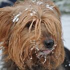 Skitsy in the snow! by Maisie Sinclair