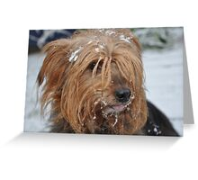 Skitsy in the snow! Greeting Card