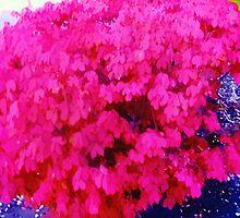 Watercolor Fuschia bush by agreement