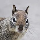 Ground Squirrel by Confundo