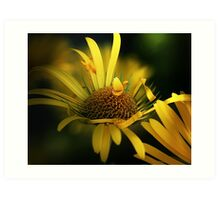 Yellow daisies macro Art Print