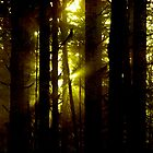 Golden light in the forest by alex skelly