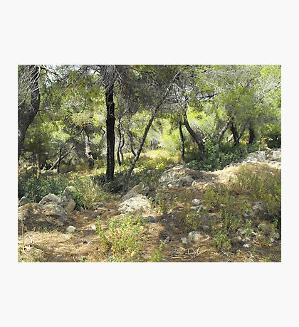 Greek forest Photographic Print