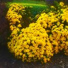 Yellow flowered bush by agreement