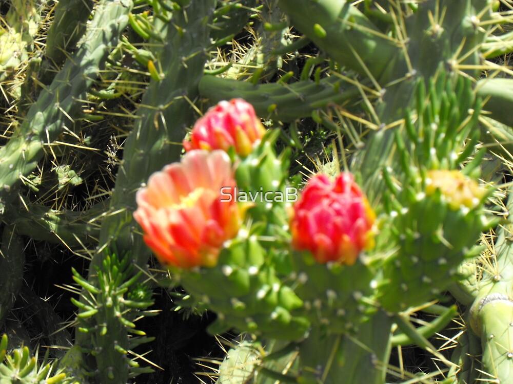 Greek cactus by SlavicaB