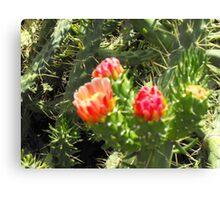 Greek cactus Canvas Print