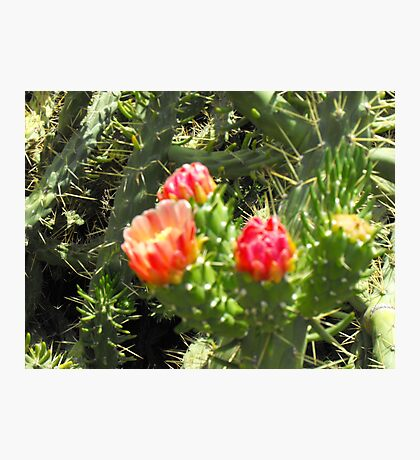 Greek cactus Photographic Print