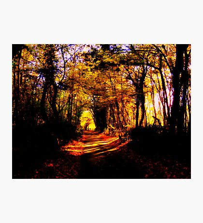 Road in a Yellow Wood Photographic Print