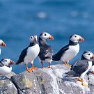 Puffins ~ Isle of May by M.S. Photography/Art