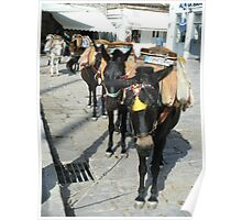 Greece: Hydra donkeys taxi Poster