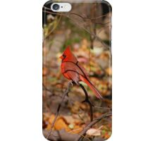 Red Cardinal iPhone Case/Skin