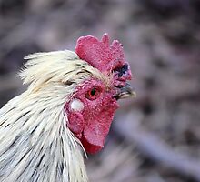 Brahma Rooster by Jazzy724