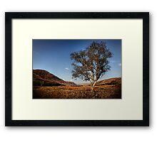 Apple Cross Tree Framed Print