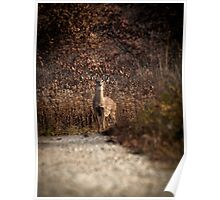 Autumn Whitetail Doe Poster