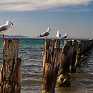 Sitting On The Dock In The Bay by Bevlea Ross