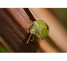 Green Shield Bug on leaf Photographic Print
