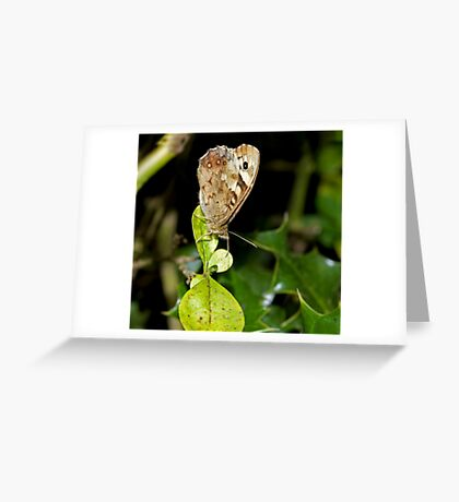 Speckled Wood butterfly wings closed Greeting Card