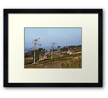 Ashdown Forest Framed Print