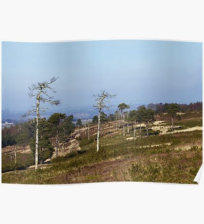Ashdown Forest Poster