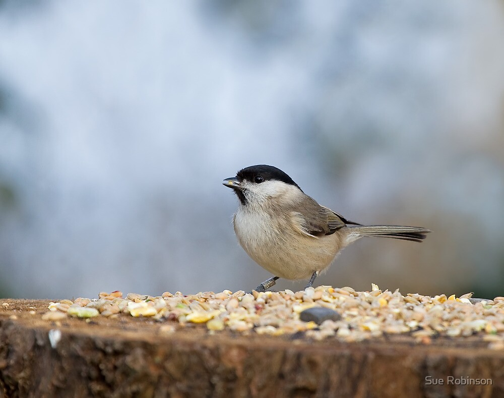 Marsh Tit with seed by Sue Robinson