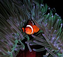 Clown Fish iPad Case by Jnhamilt