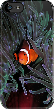 Clown Fish iPhone Case by Jnhamilt