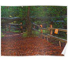 Wooded Shade Area in Tilden Park, Berkeley, California Poster