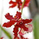 Orchid 4 by Joy Fitzhorn