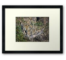 Early Morning Branch Climbing Framed Print