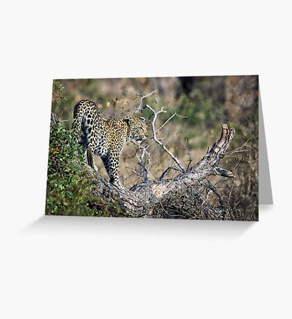 Early Morning Branch Climbing Greeting Card