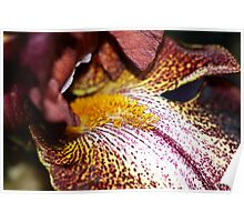 Orchid macro side Poster