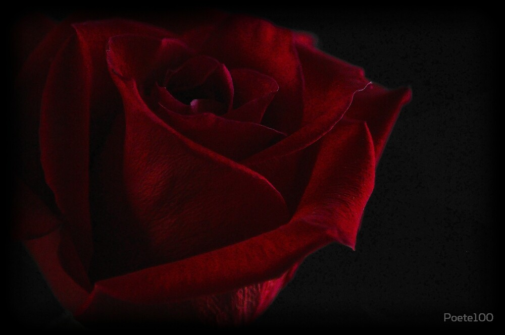 The Rose by Poete100