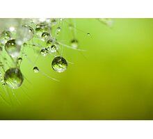 Dandelion Lashes Photographic Print