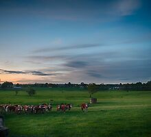 Cows at sunset by thehazelifted