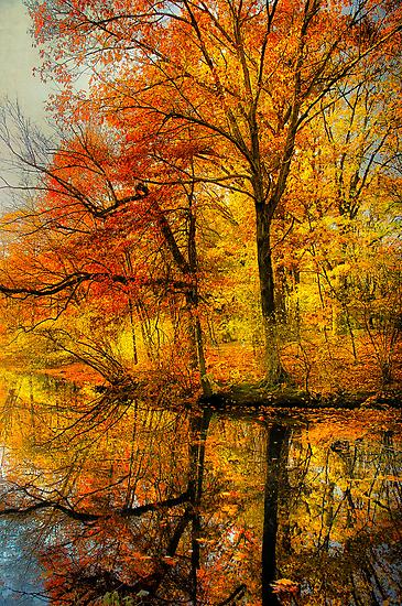 Fall colors of New England by LudaNayvelt