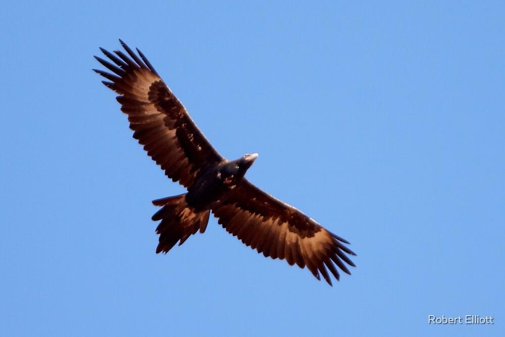 Wedge-tailed Eagle ~ Soar High Fly Free by Robert Elliott