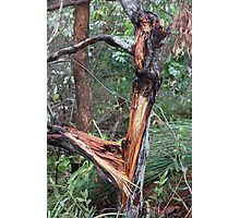 Aussie Bush Sticks: Wild Storm Last Night Photographic Print