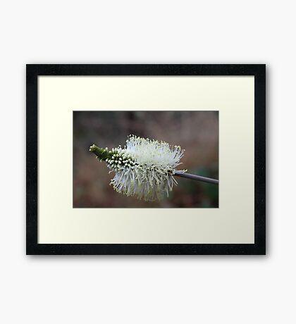 Wildflower of a Bush Grass Framed Print