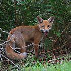 Wild by byronbackyard