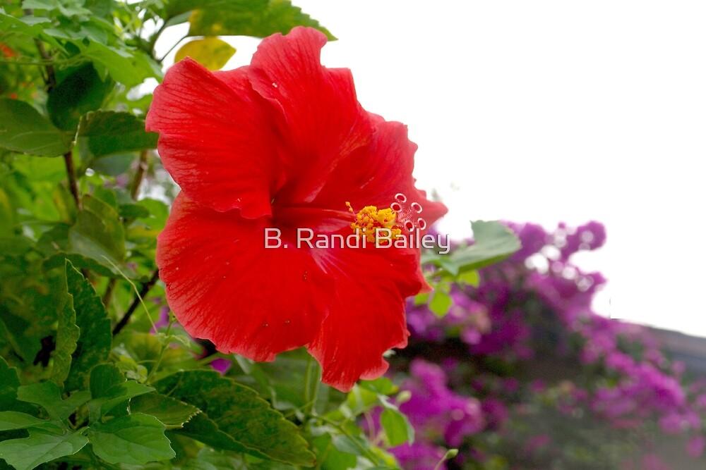 Floral highlights by ♥⊱ B. Randi Bailey