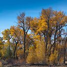 Along the Musselshell River by Rob  Holcomb