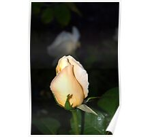 Light peach colored bud Poster