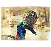 Southern Cassowary Bird Poster