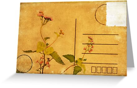 floral pattern on postcard by naphotos