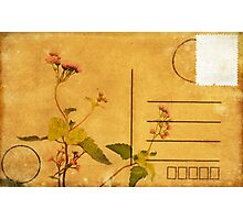 floral pattern on postcard Photographic Print
