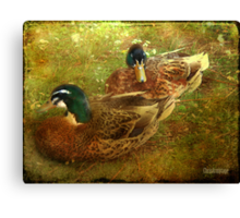Down by the lake ... Canvas Print